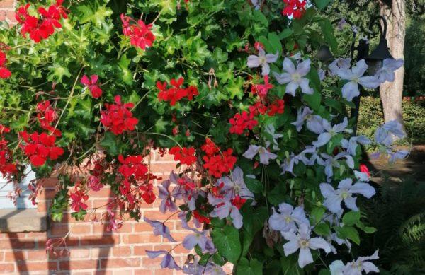 Blumen an Fachwerkhaus